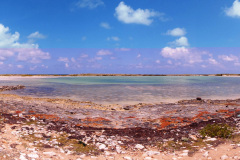 Salt-Cay-South-Creek-Bird-Sanctuary